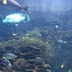 Океанографический парк Валенсия